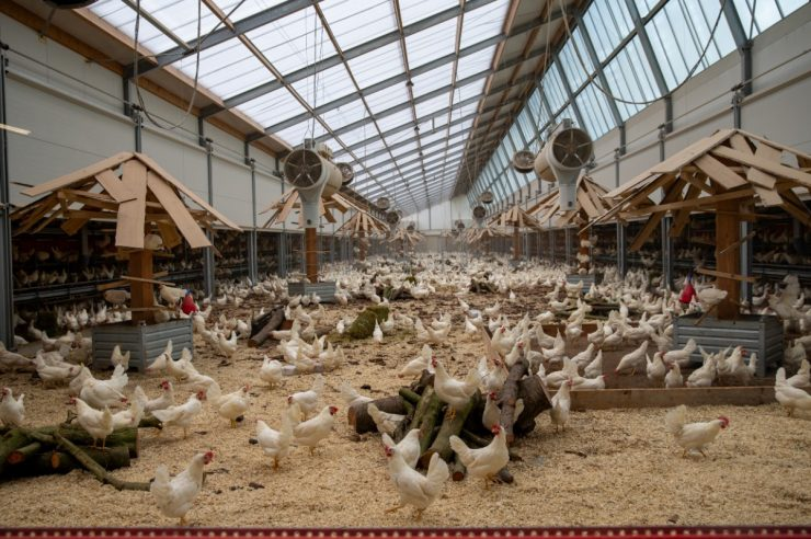 Image for Farms of the future: the chicken farm run by a vegetarian