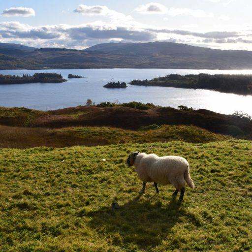 Ein Wasserkraftprojekt in Loch Awe in Argyll, Schottland