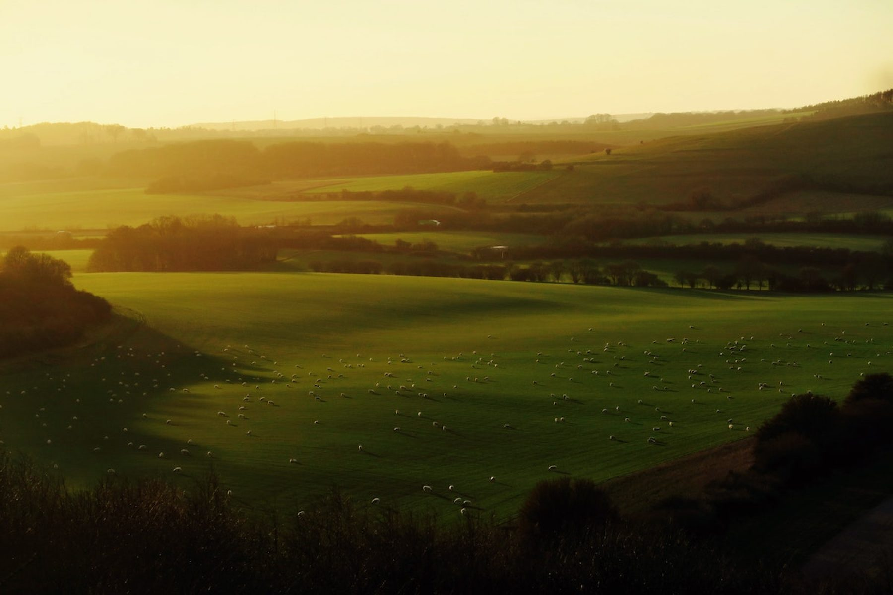 Image for Spotlight on soil: farming returns to its roots
