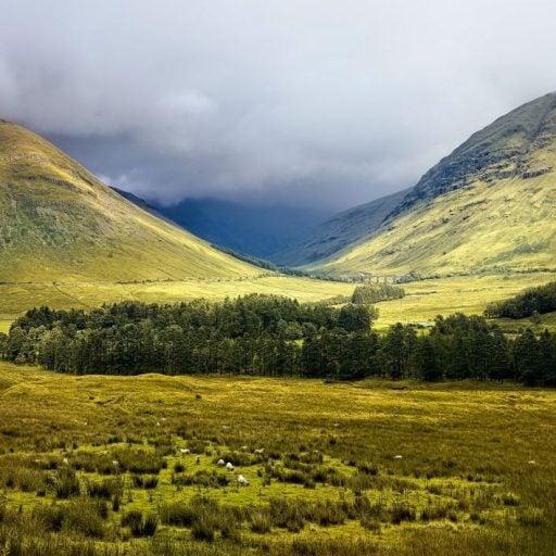 Rewilding the Scottish Highlands during lockdown