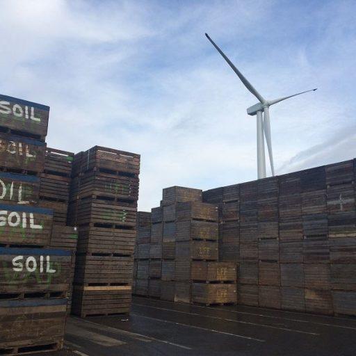 Der Windpark March in Cambridgeshire betreibt eine Kartoffelverarbeitungsanlage