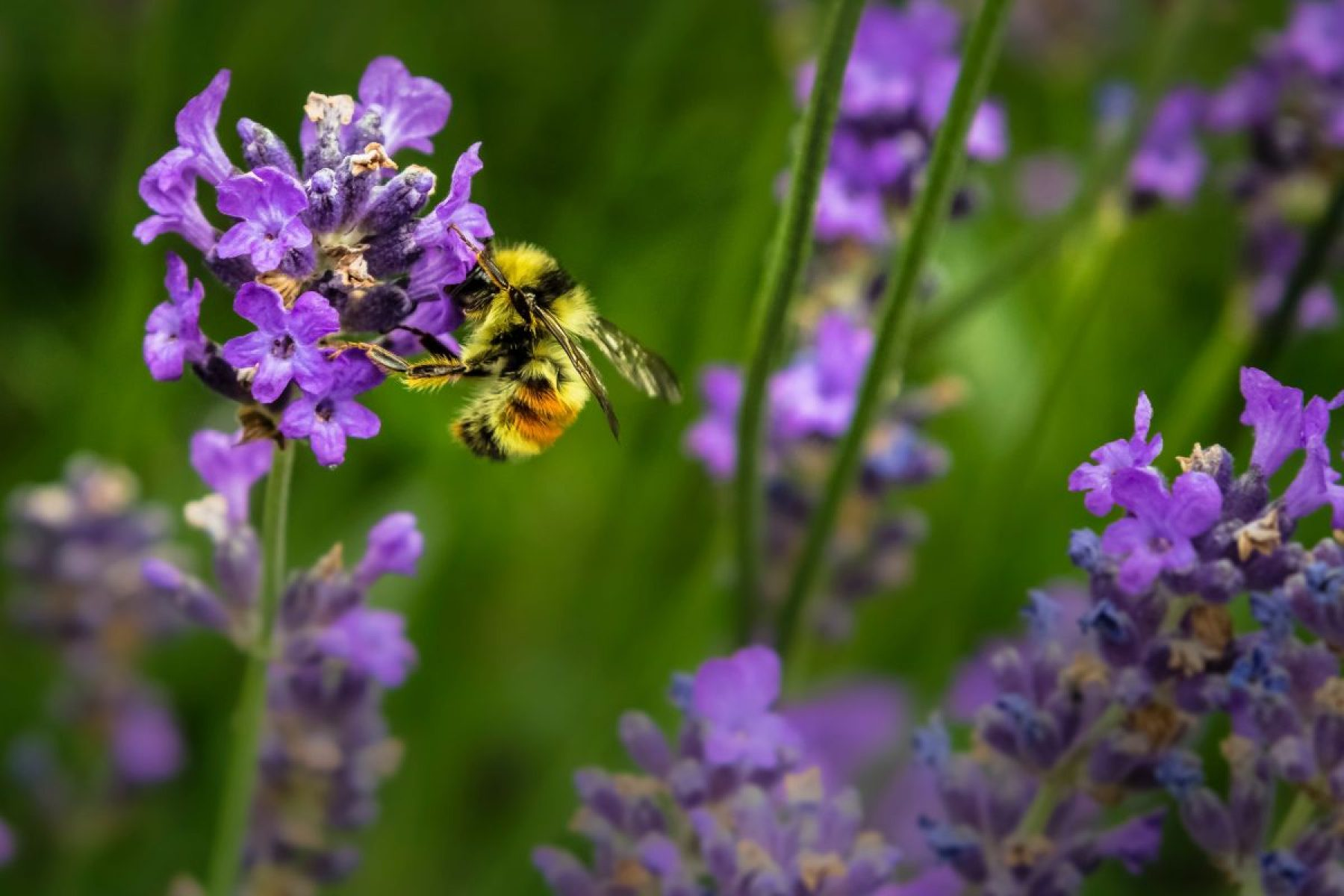Image for Feeding bees and greening the economy: what went right this week