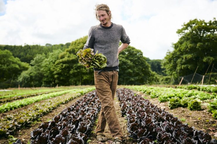 Image for Farm to fork: the open database that lets people buy food direct from source