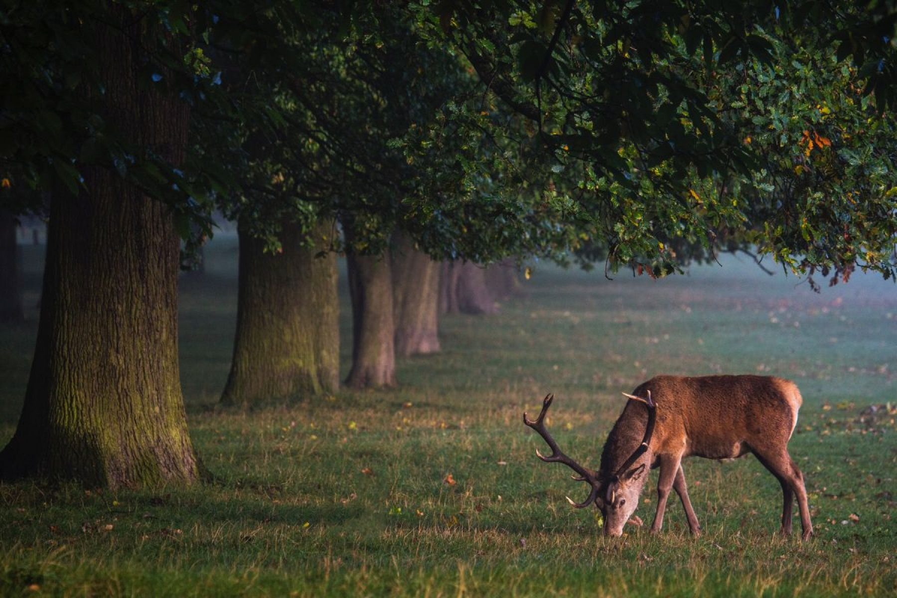 Image for Rewilding Britain: the plan to restore an area the size of Manchester