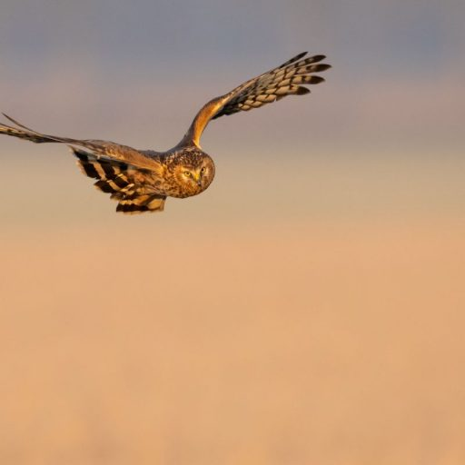 Rewilding Britain: the plan to bring nature back