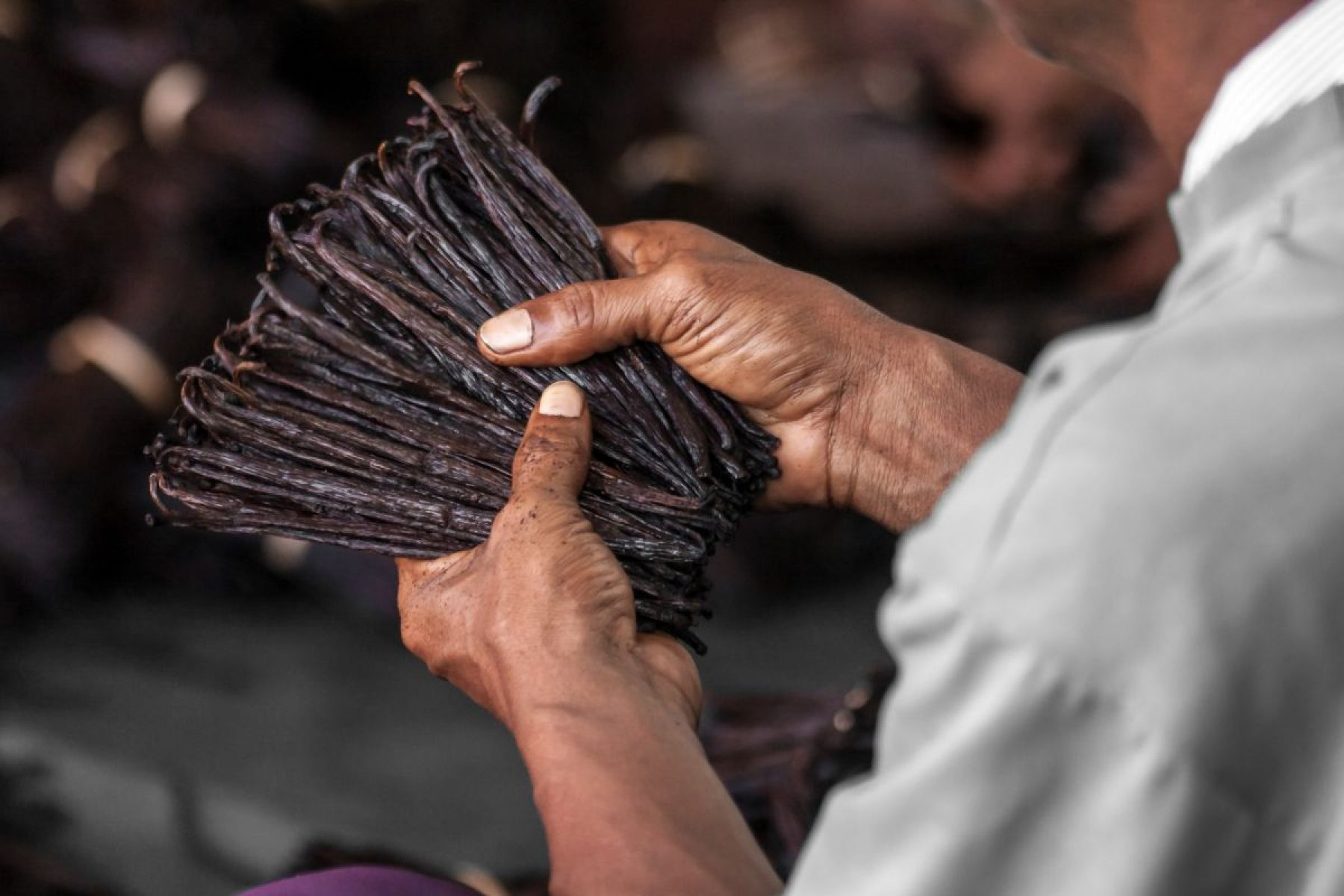 Image for Madagascar's vanilla farmers are being inspired to plant trees – by a gecko