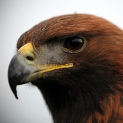 Eagles returned to Highland estate
