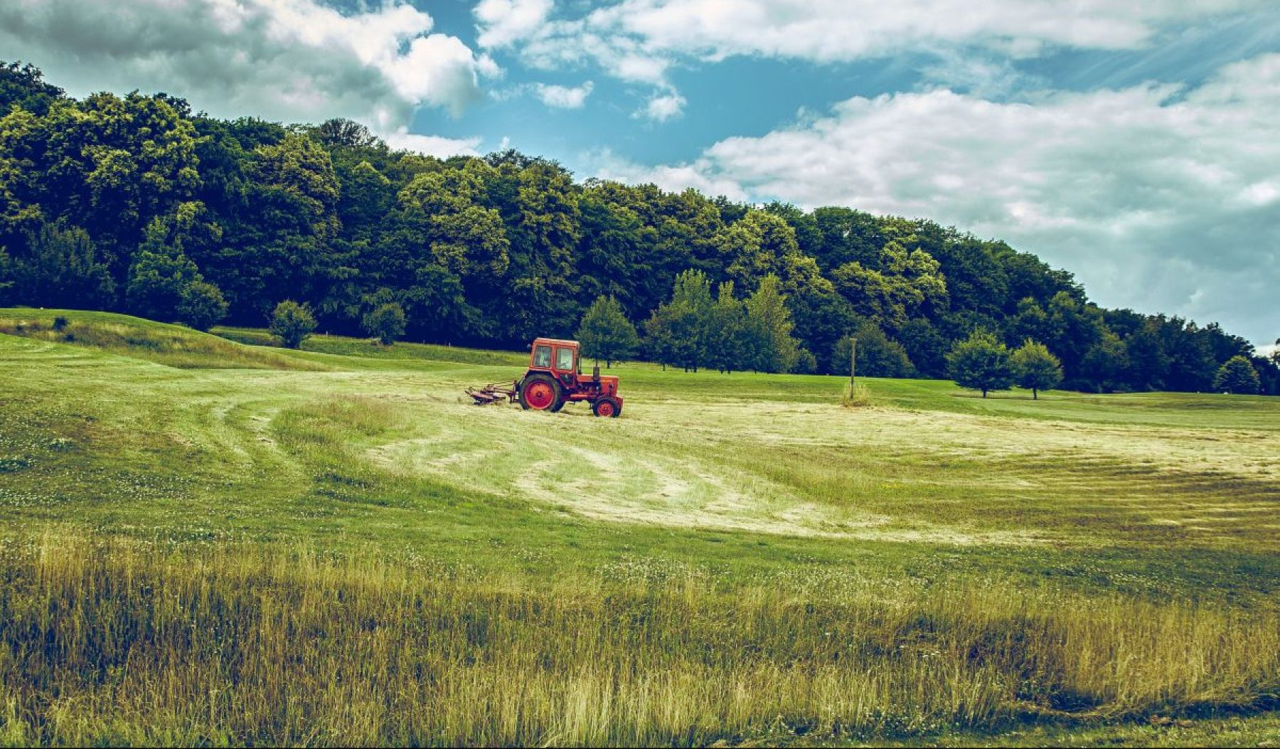 Image for Organic diet 'dramatically reduces exposure to toxic pesticides'