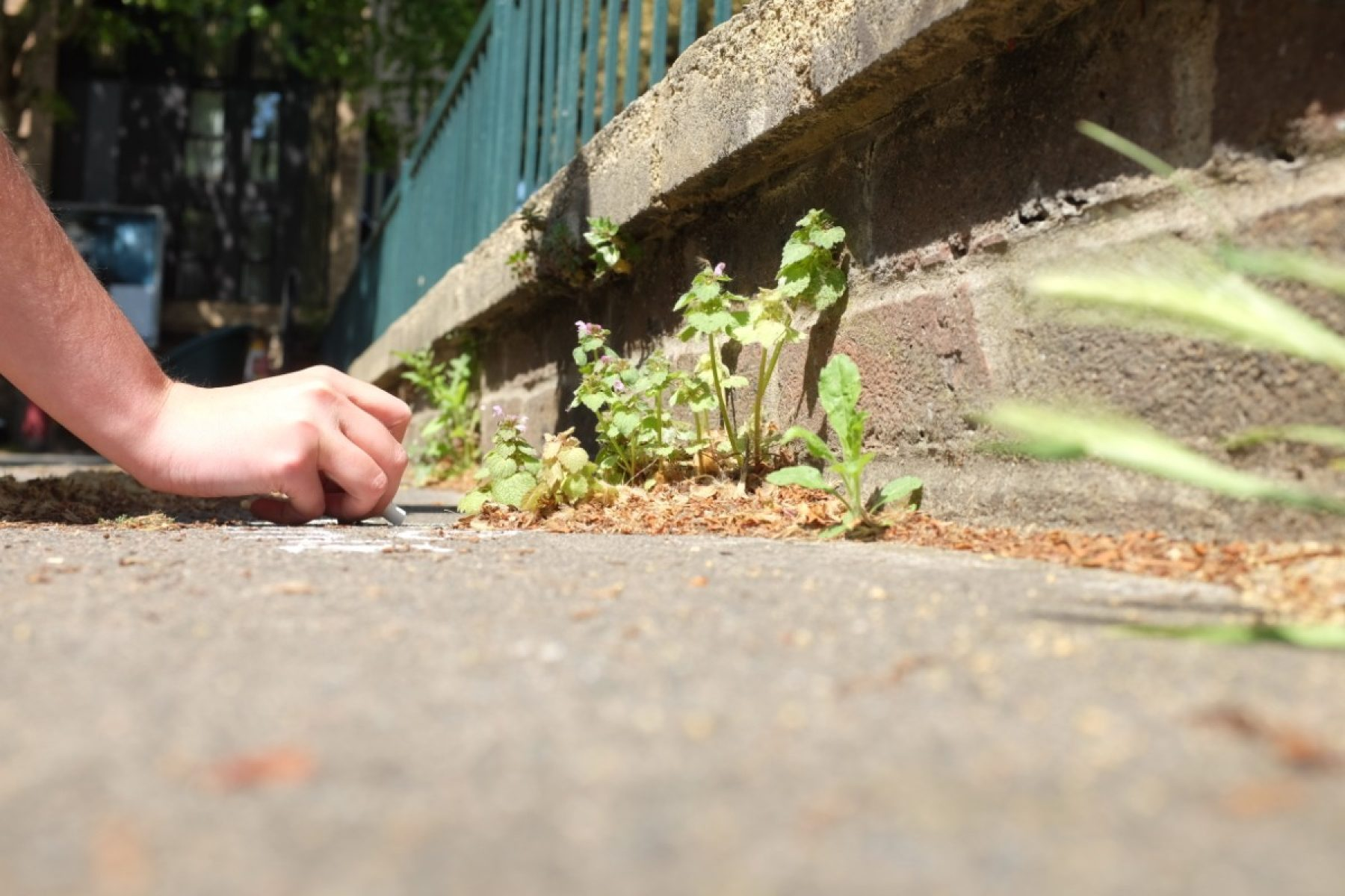 Image for More than weeds: the rebel botanists on a mission to celebrate urban plants