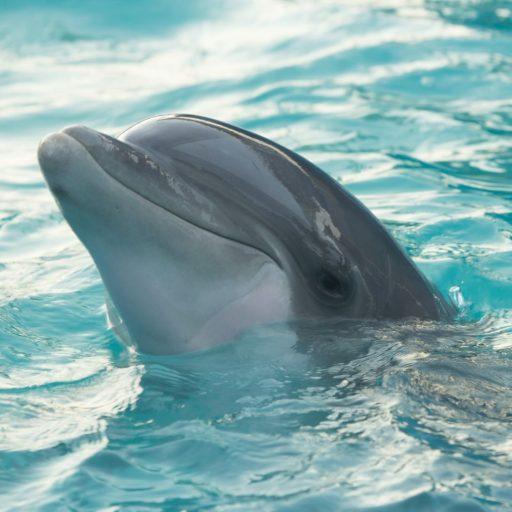 Positive news: France announced new animal welfare laws