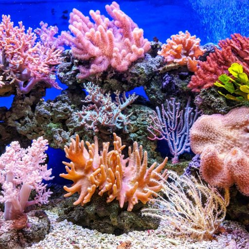 Positive news: Plans for coral ark to save reefs