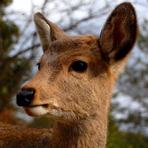 Positive news: Japan created an edible bag to save its deer