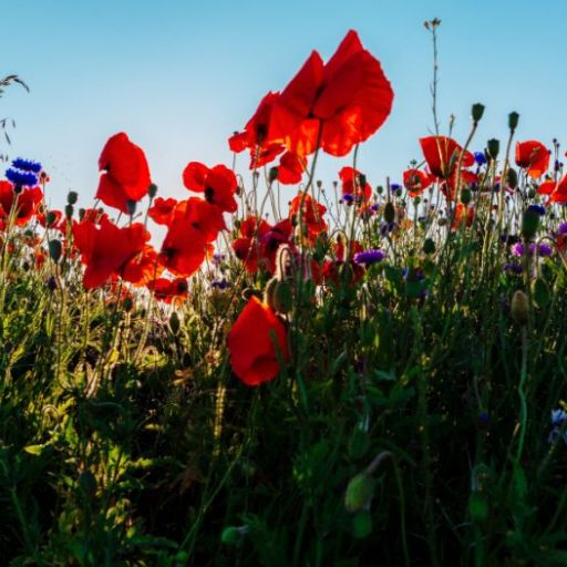 Wildlife-friendly construction: wildflower verges