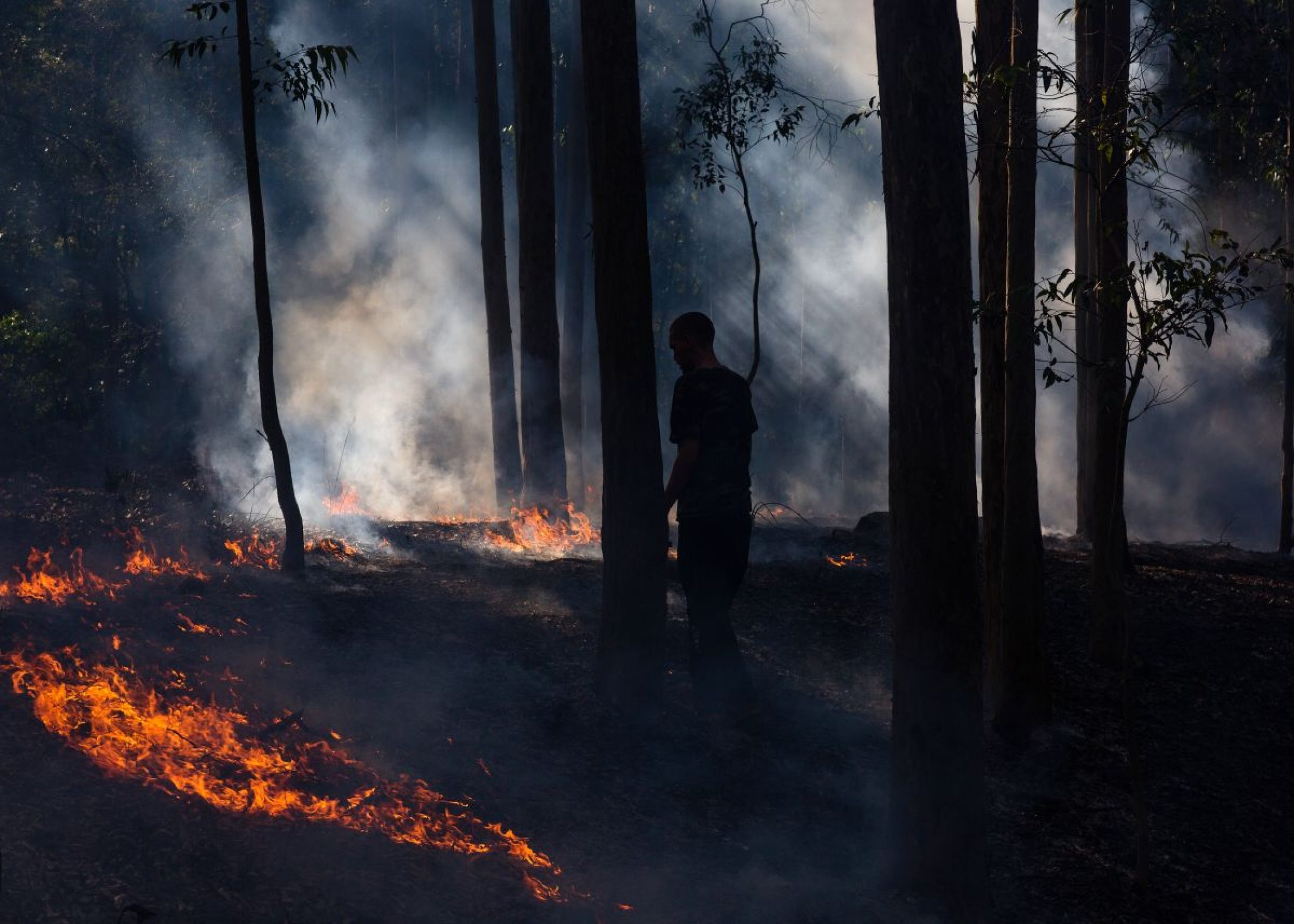 Walking with a cool fire, which is an indigenous fire management practice, is Yuin man Jacob Morris.