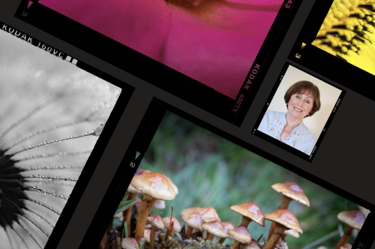 Image for The natural detective: meet the forensic ecologist who uses nature to solve crimes