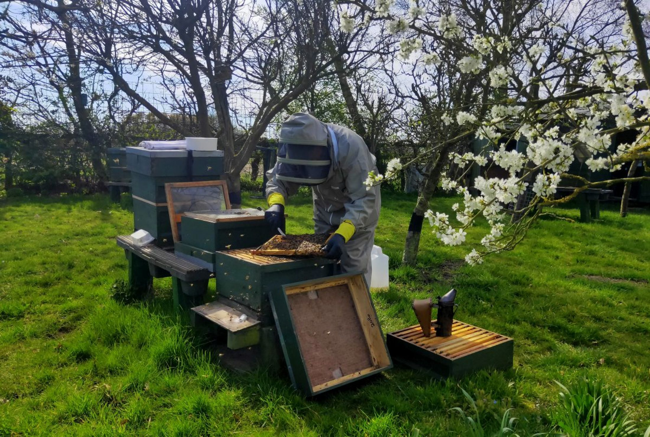 An apiary at the Cooper King Distillery