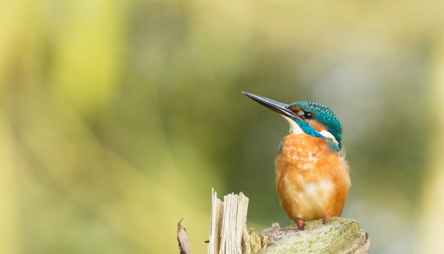 Image for Efforts to rewild London's rivers are yielding results, finds report