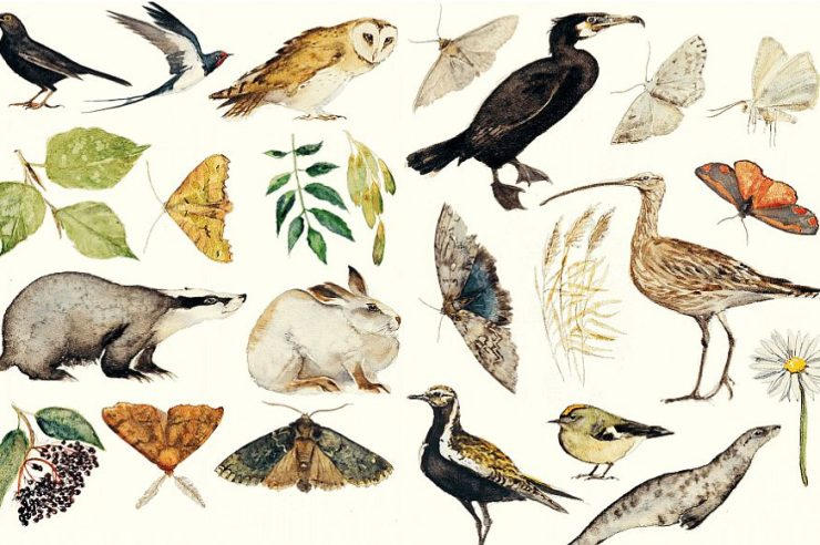 Image for Book of 'nature spells' to be turned into free livestreamed show