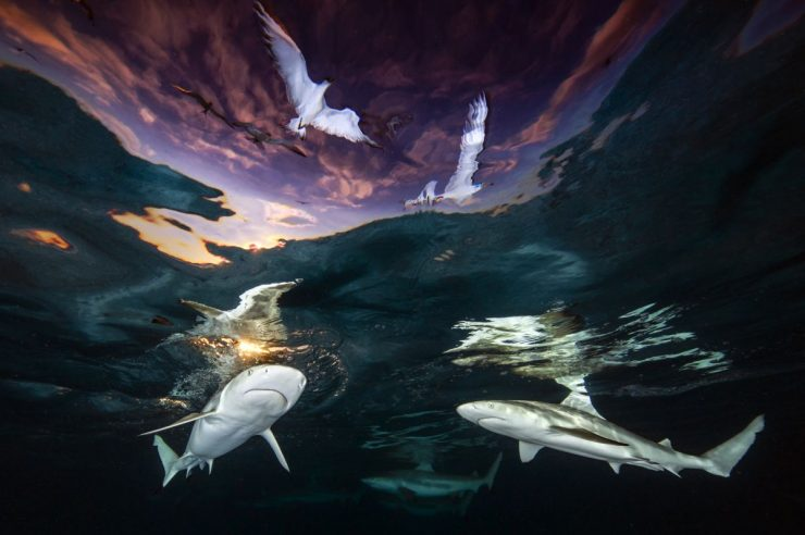 Image for In pictures: photography competition brings ocean conservation into focus