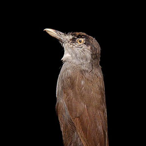 Positive news - A bird missing for 180 years was found