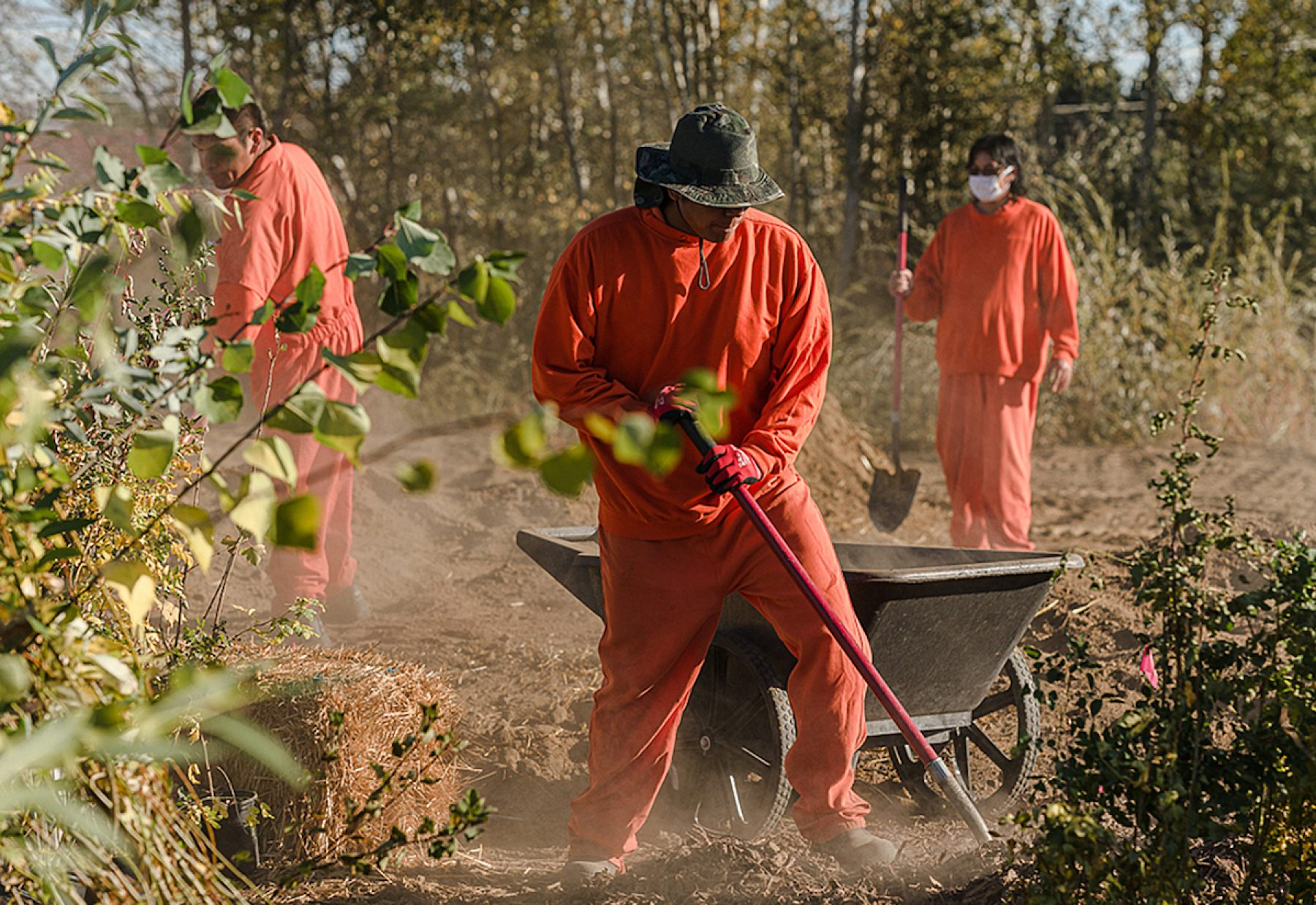 Image for The 'healing forest' planted by indigenous US inmates