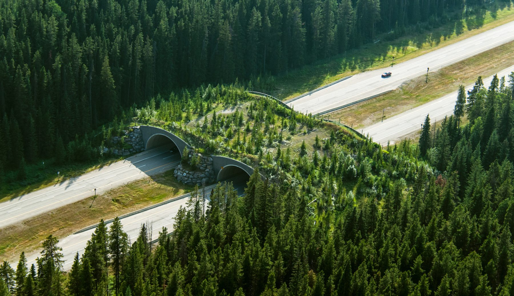 Image for Reindeer viaducts: the latest wildlife bridges that connect fractured habitats