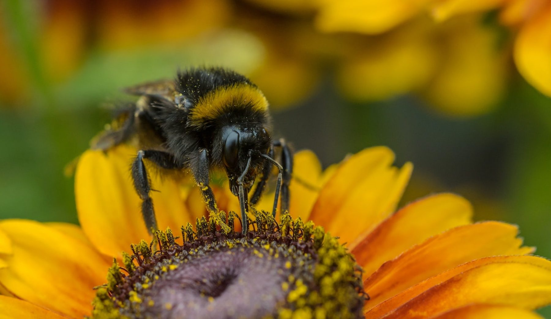 Image for What went right this week: Dutch bees buzz back, and more positive news