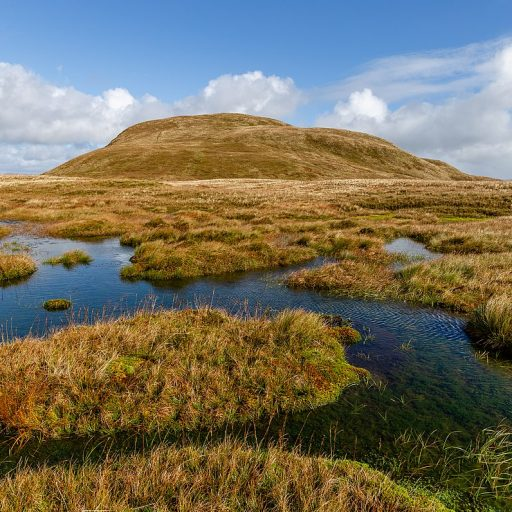 Positive news - the UK announced plans to protect peatlands