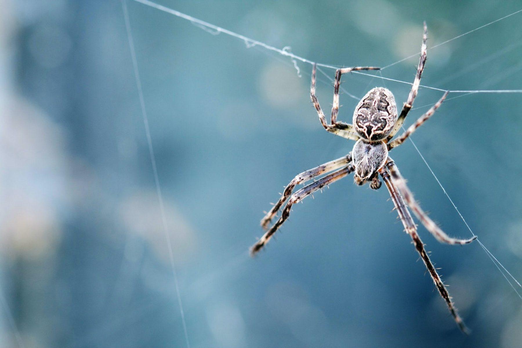 Image for Children's comic competition celebrates 'misunderstood' spiders