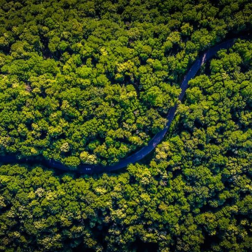 Positive news this week - Research revealed global reforestation successes
