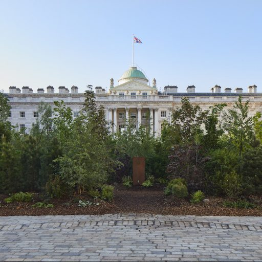 Somerset House in London now has a 'forest' growing in it