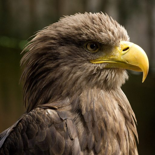 Positive news - Eagles have returned to Loch Lomond after 100 years