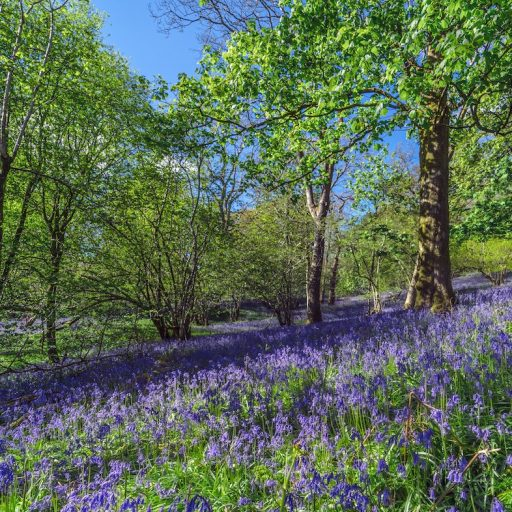 Positive news - English landowners will be paid to plant trees