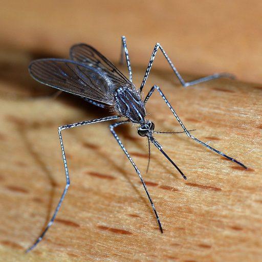 China was declared malaria-free this week