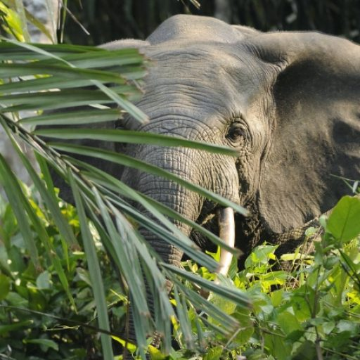 Positive news - Africa's largest forest reserve was removed from danger list