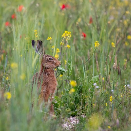 Positive news - A major rewilding project has been announced for England