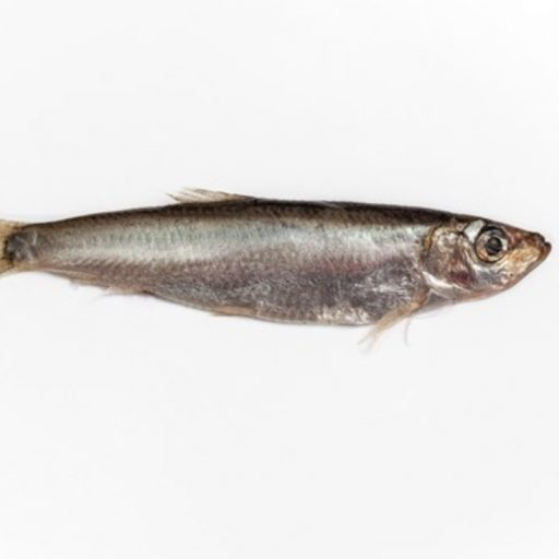 Sprat returned to the River Clyde in Scotland