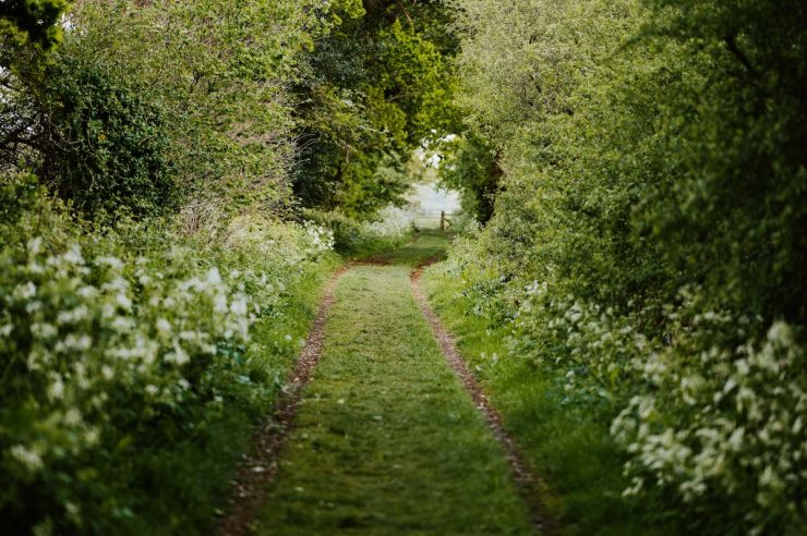 Image for Corridors of power: how hedgerows can help us tackle the climate crisis