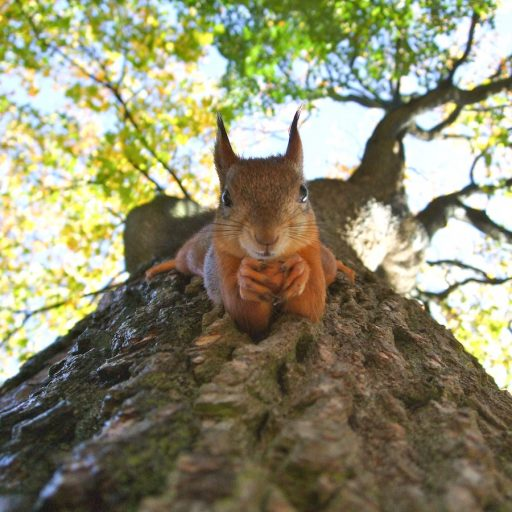 There was positive news for red squirrels this week