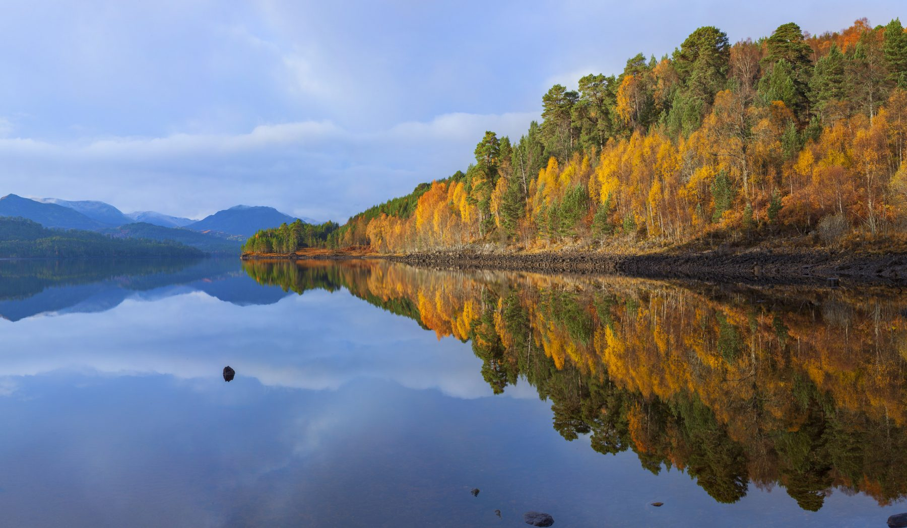 Image for Scottish Highlands to be transformed by major rewilding project