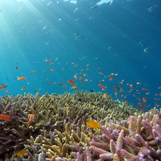 Good news - Philanthropists pledged $5bn (£3.7bn) to protect nature
