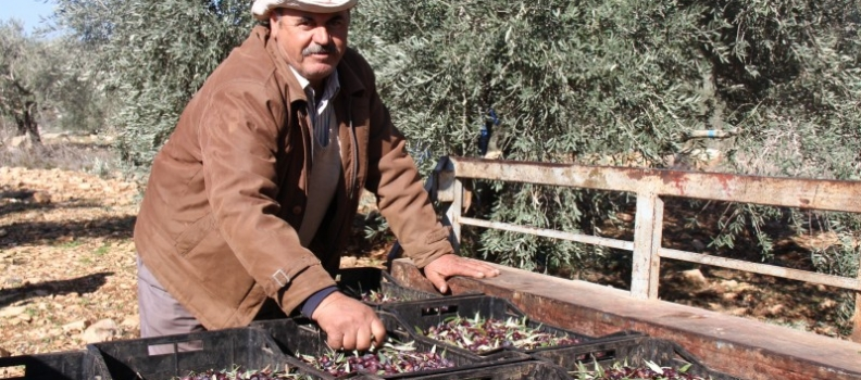 Israeli and Palestinian farmers unite over olive oil