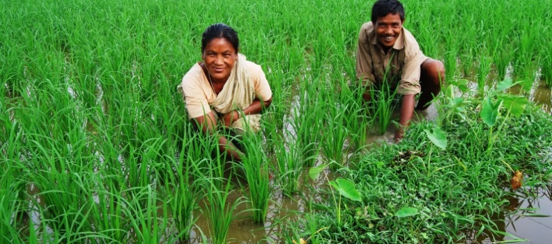 'Blue-green' revolution could boost food security in Bangladesh