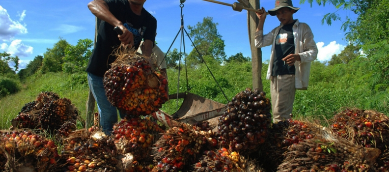 Huge palm oil company promises to end deforestation